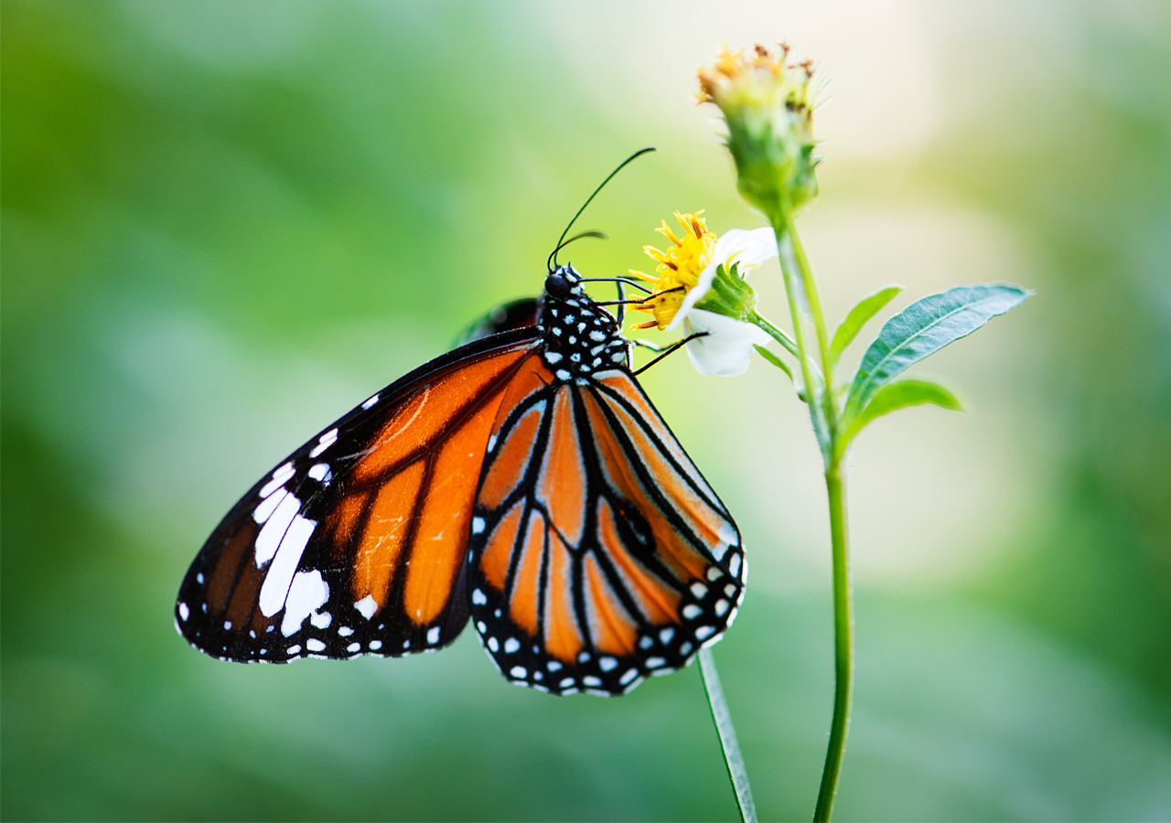 Newly habitat is hard for butterflies to live