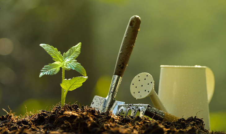 Involving Credible Cannabis seeds Will Ease The Burden Of Getting Best Benefits