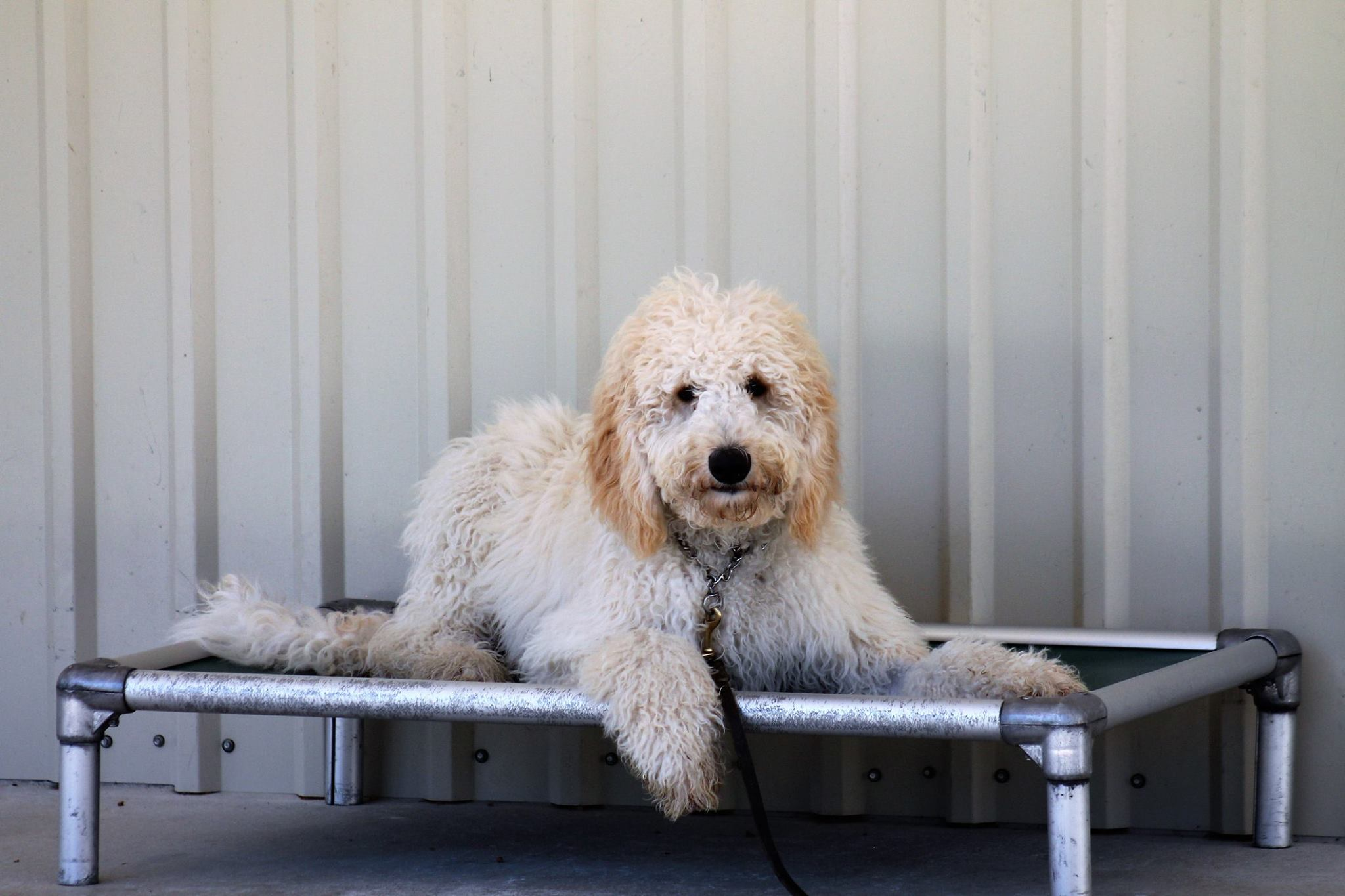 The best Houston dog grooming