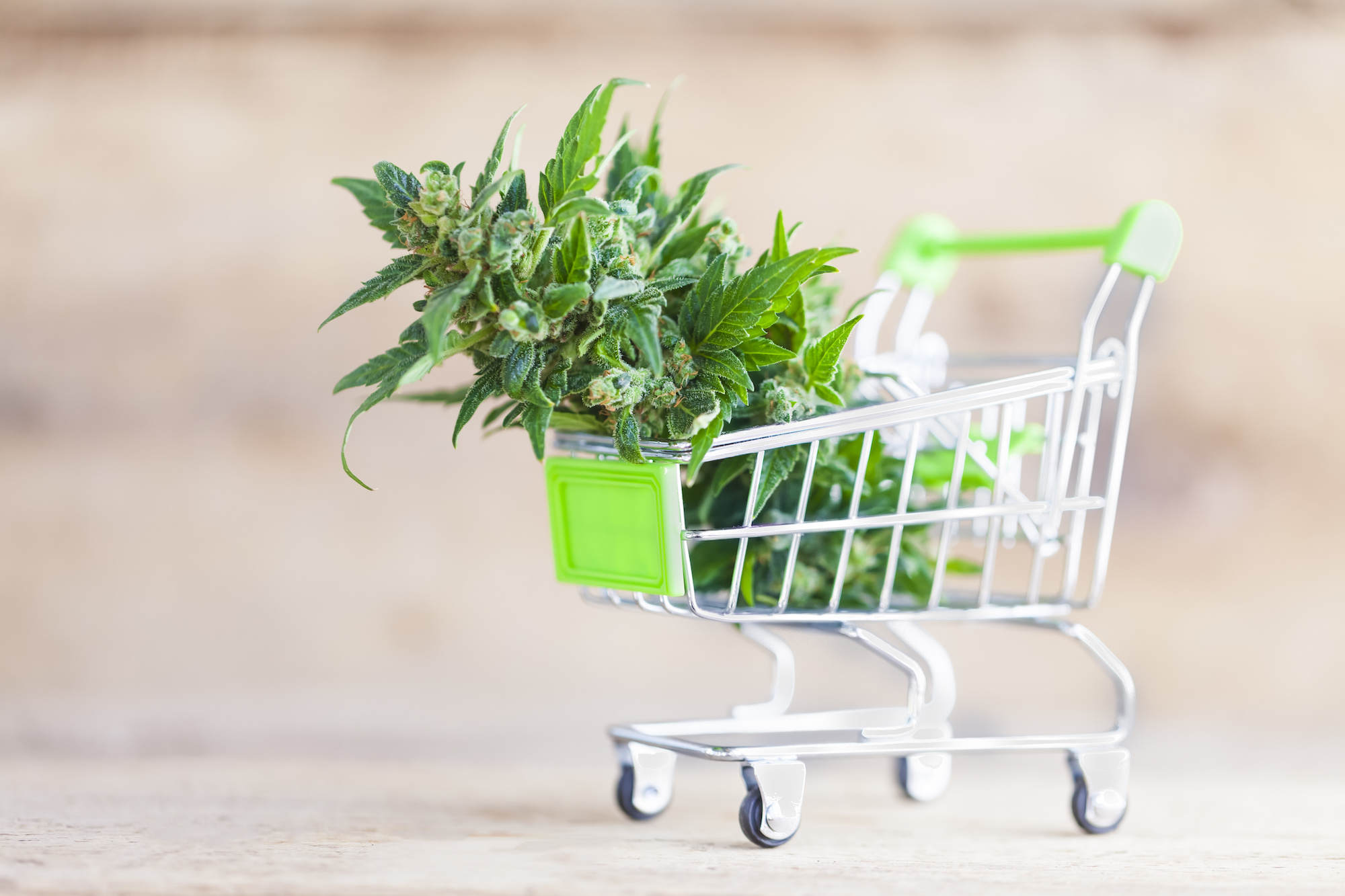 You can buy with the new way of weed delivery Whitby